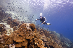 explore the underwater world at Koh Chang